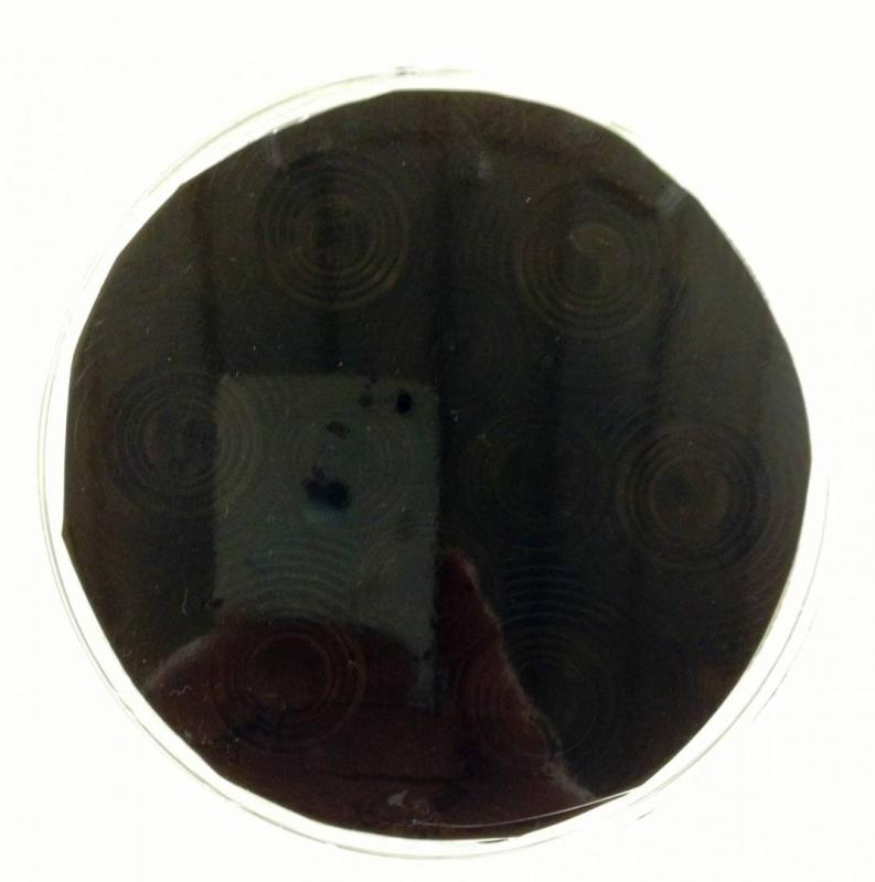 VN BASIC 40cm Strålkastarfilm (mörk)