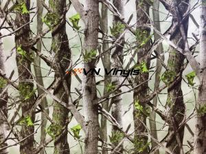 VN WRAP - FOREST CAMO SPRING VINYL