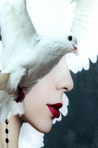Glastavla Foto Mother of Doves,120x80cm