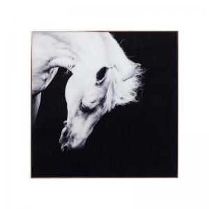 Tavla Foto Häst svart-vit