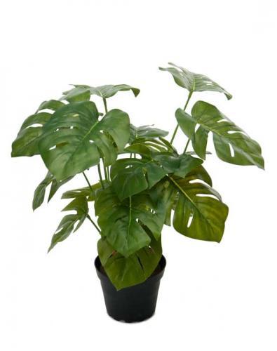 Konstväxt Monstrera, 30 cm