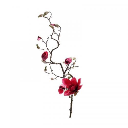 Kvist Magnolia Röd, 135 cm