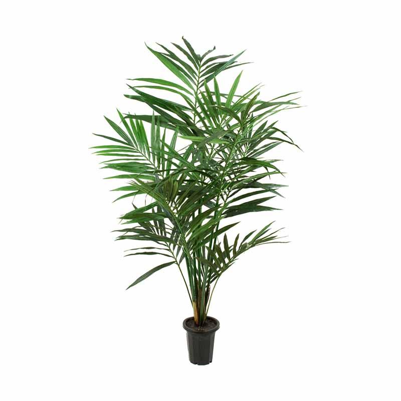 Konstväxt Palm, Kentia 120 cm