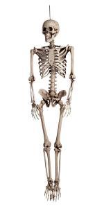 Skelett dekoration 160 cm