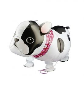 Gående Fransk bulldog