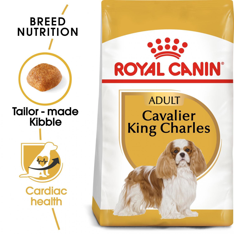 Cavalier King Charles Adult 7,5 kg