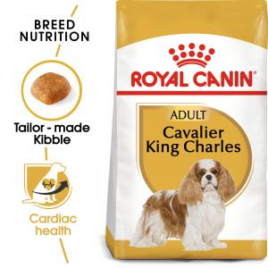 Cavalier King Charles Adult 7,5 kg