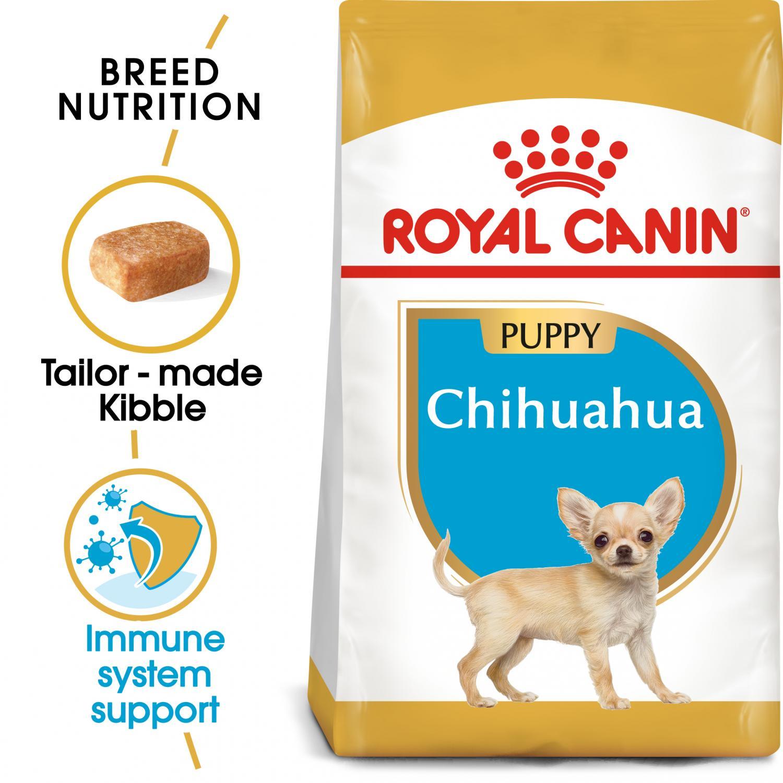 Chihuahua Junior 1,5 kg