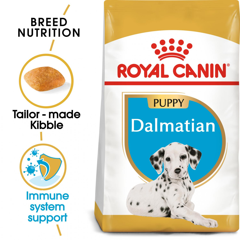 Dalmatian Puppy 12 kg