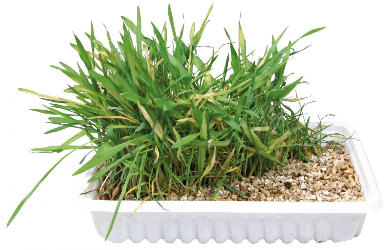 Katte græs fad, skål/approx. 100 g