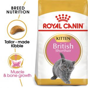 British Shorthair Kitten 10 kg