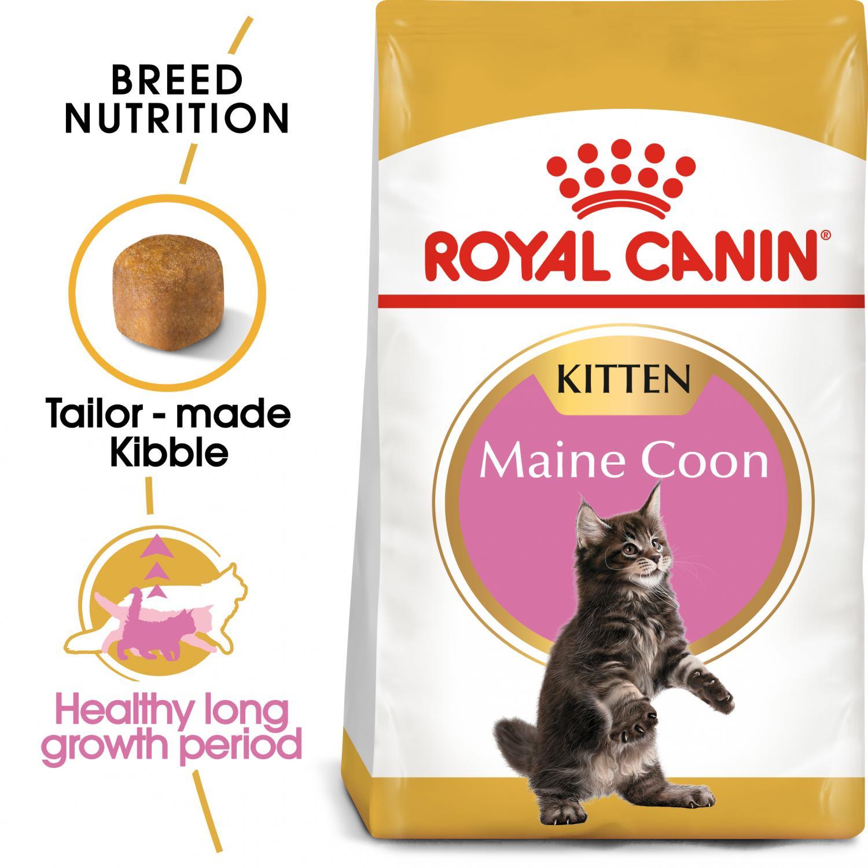 Maine Coon Kitten 10 kg
