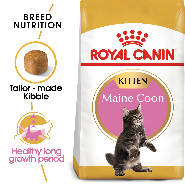 Maine Coon Kitten 4 kg