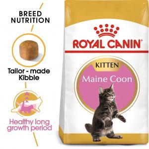 Maine Coon Kitten 2 kg