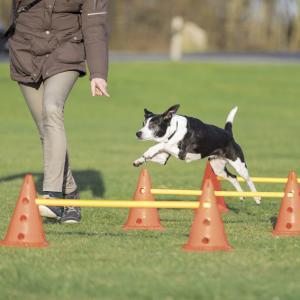 Dog Activity Hinderset 3 hinder, ø23×30cm, 78cm, orange & gul