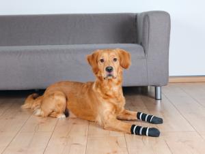Hundskor, L/XL, 2-pack, svart