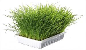Mjukt kattgräs vitaminbrikad ca 100g