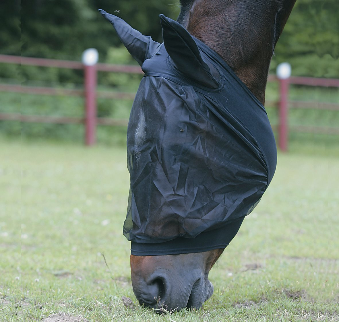 Flughuva, svart ponny