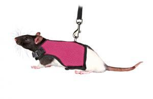 Softsele+koppel, råtta, 12-18cm, 1.20m