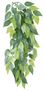 Hängväxt, silke, Ficus, ø 20 × 30 cm