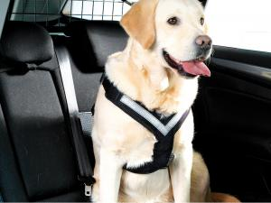 MIMSafe Allsafe Harness X-large